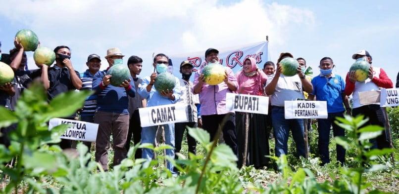 Produksi Pertanian Holtikultur Tak Terkendala pandemi, Bupati Alfedri Bersama Warga Panen Semangka