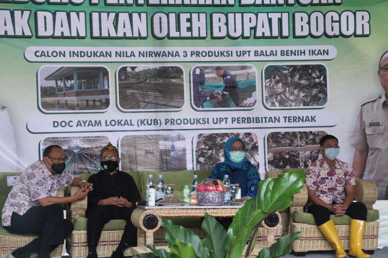 Bupati Bogor Berikan Bantuan Ternak Ayam dan Benih Ikan Kepada Pembudidaya di Desa Gunung Sari