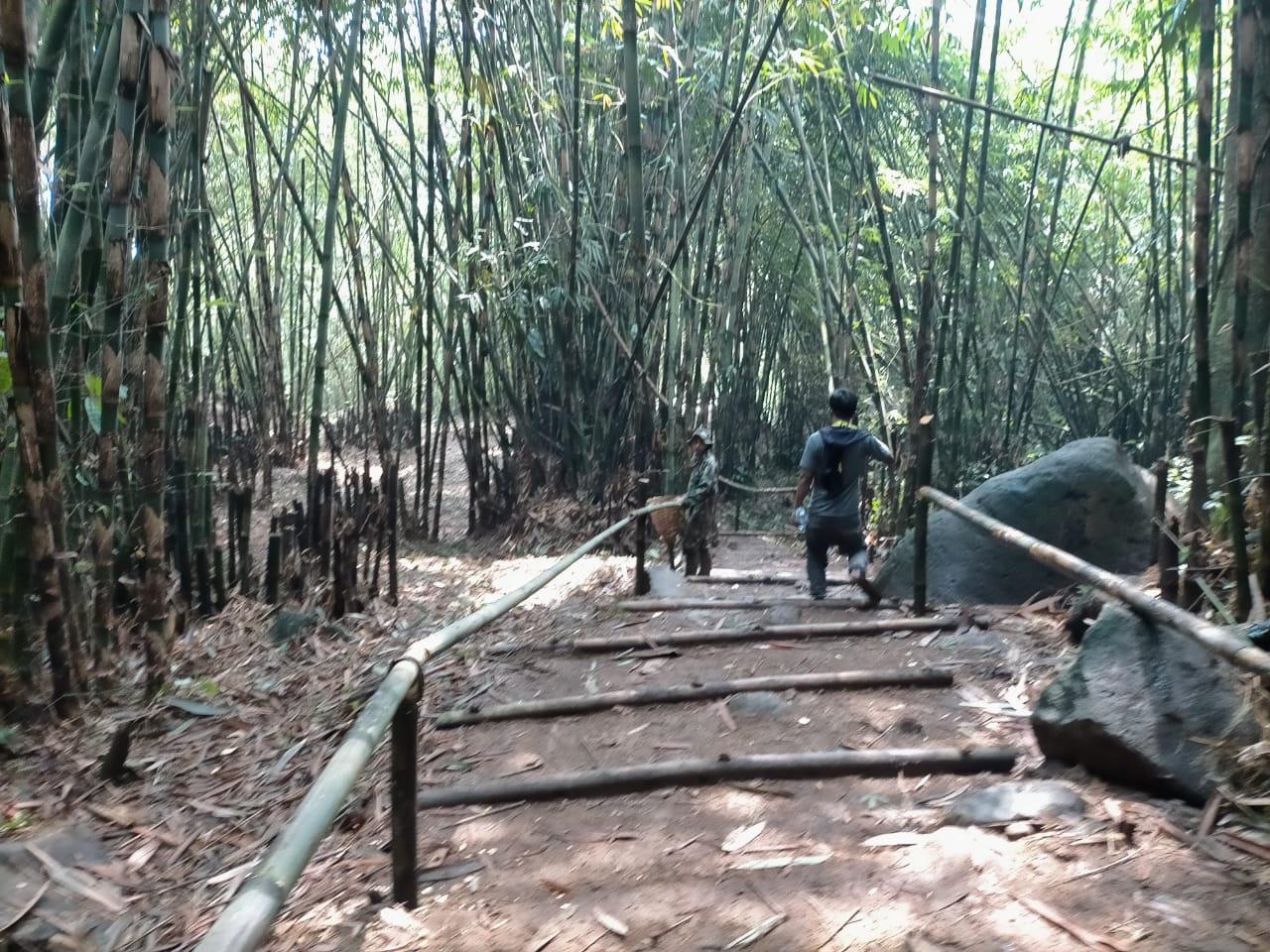 Hutan Bambu Disulap Jadi Obyek Wisata Tracking dan Selfi 235